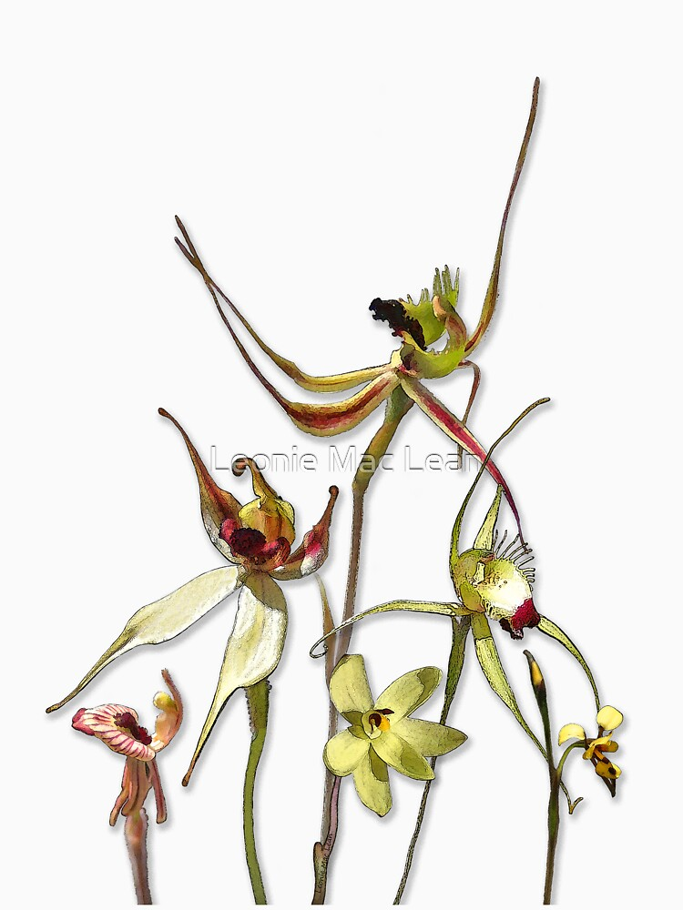 Orchids of Australia 4 by yallmia