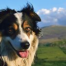 Border Collie Kingdom by Michael Haslam