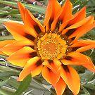 Orange! by MaddyPaddy