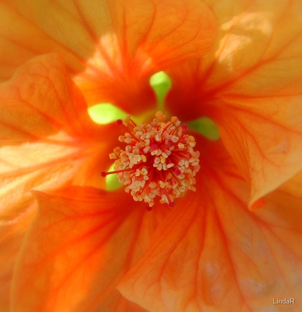 Orange... by LindaR