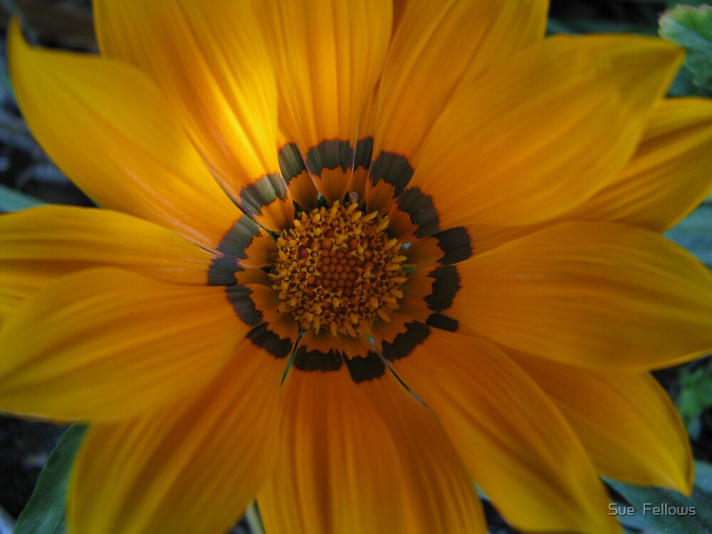"""""""You are my Sunshine"""" by Sue  Fellows"""