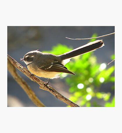 Lil' Bird Photographic Print
