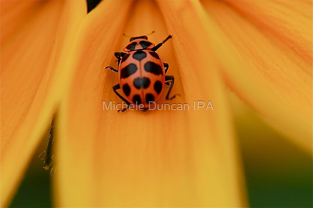 Lady Bug Slide by Michele Duncan IPA