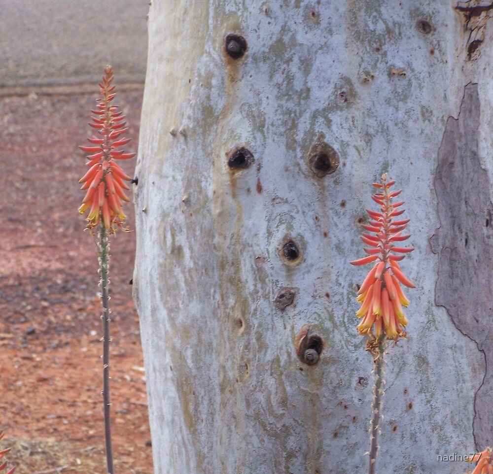 Australian Outback Flowers by nadine77