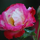 Fresh and Joyful by Lozzar Flowers & Art
