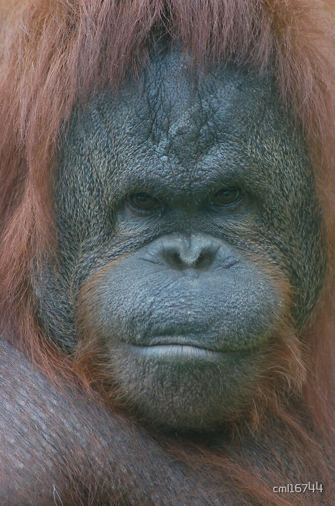 Orangutang - Eye to Eye by cml16744