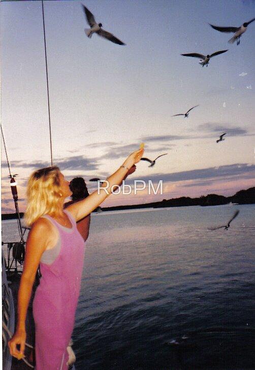 Feeding the Gulls by RobPM