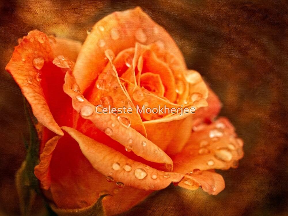 Autumn rose by Celeste Mookherjee