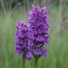 Orchid by Edward Gunn