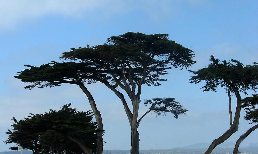 Trees by M. Stephanie Kellerman