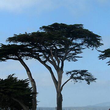 Trees by kellerman