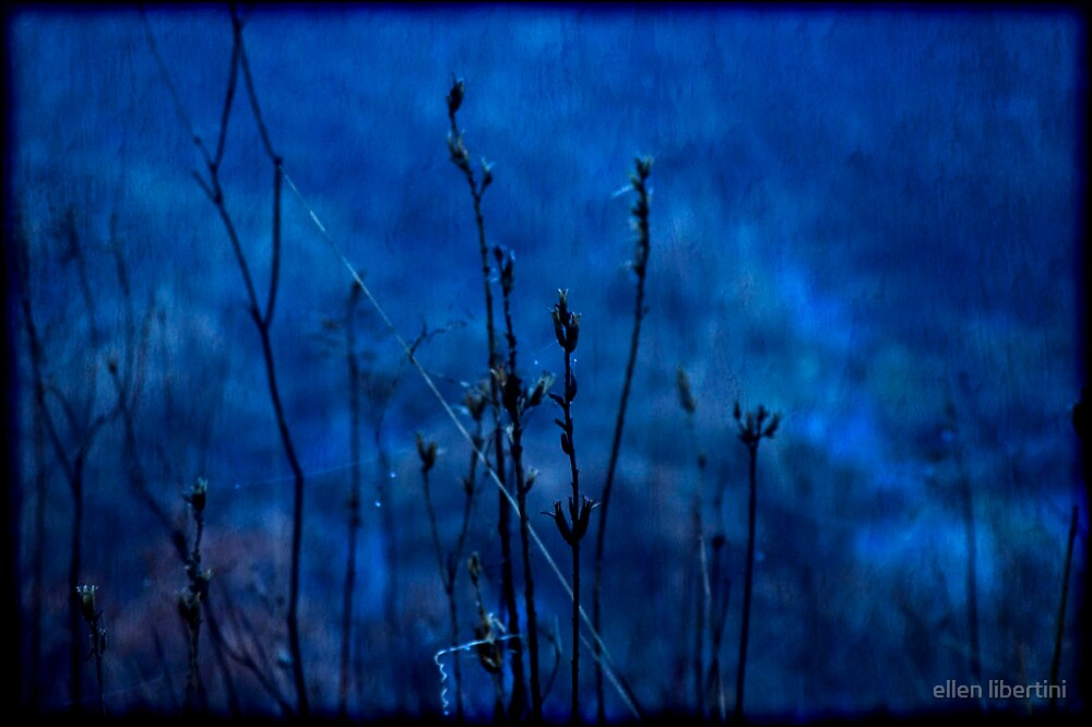 night by ellen libertini