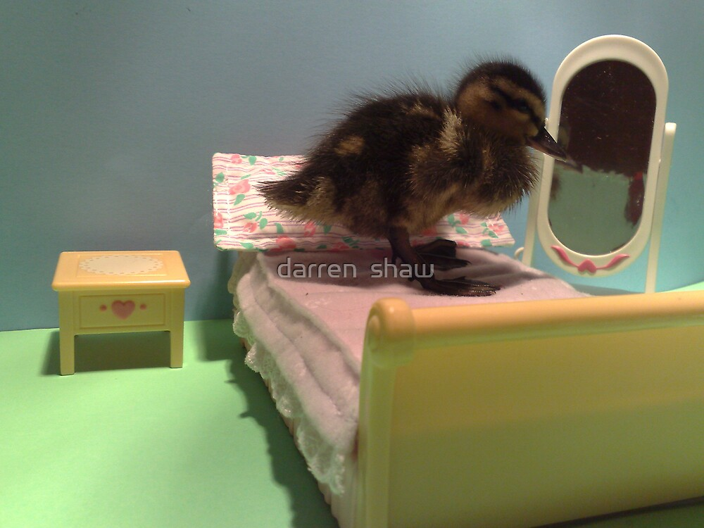 duckling getting ready for bed  by darren  shaw