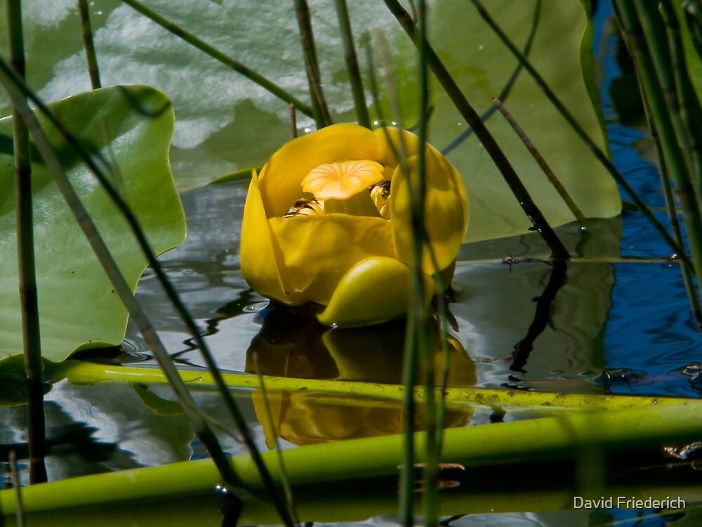 Wetland Garden by David Friederich