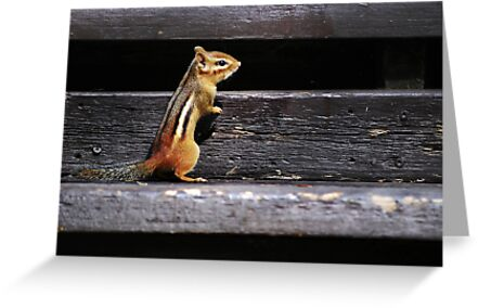 Tiny Visitor... by Laurie Minor