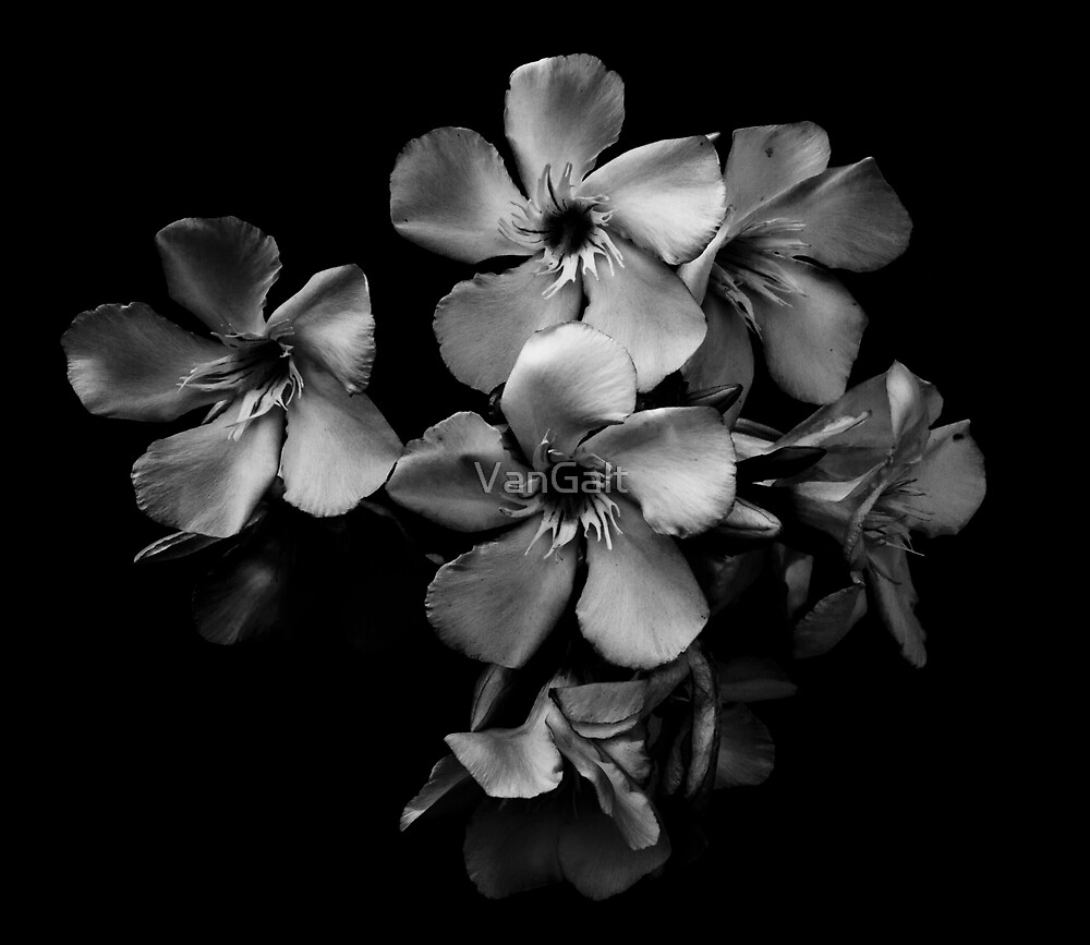 Oleander Flowers In Black And White By Vangalt Redbubble