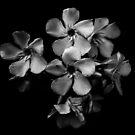 Oleanderblüten in Schwarz und Weiß von VanGalt