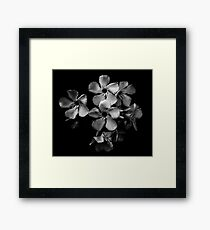 Oleander flowers in black and white Framed Print