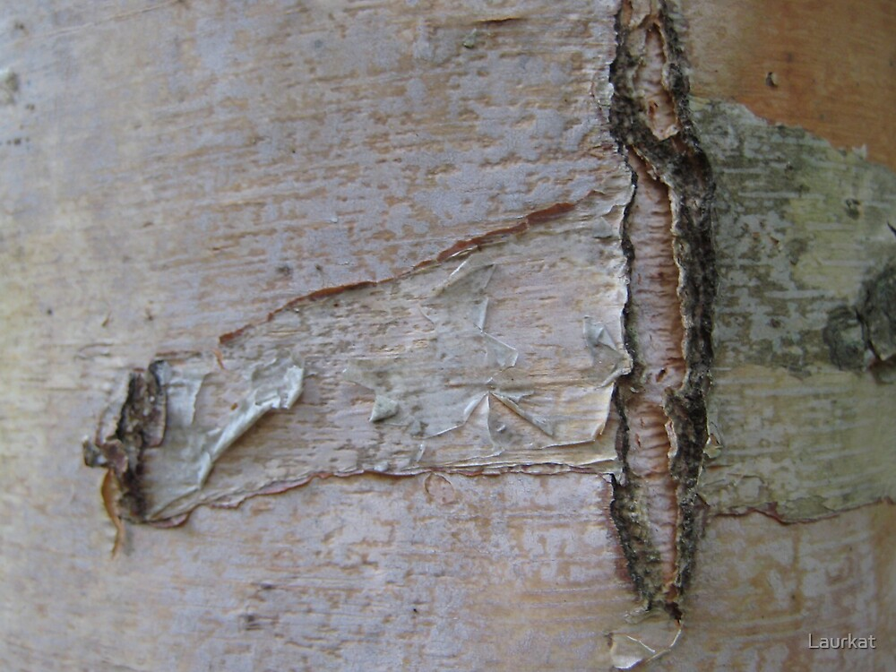 Talking Rock birchbark by Laurkat