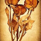 1713 Dried Roses by Hans Kawitzki