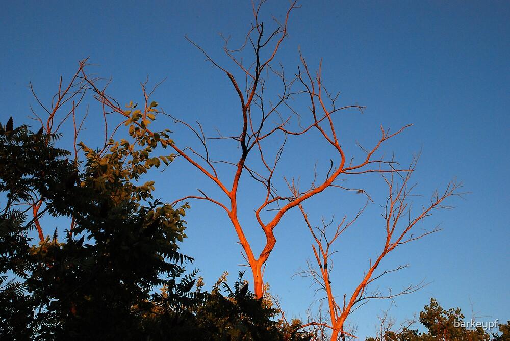 Sunset Tree by barkeypf