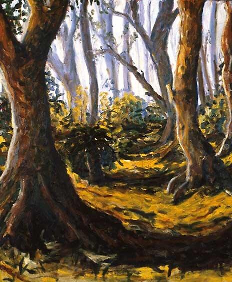 A bushland path by Wyn Richards