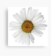 White Flower Petals Canvas Print