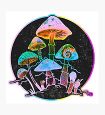 Garden of Shrooms 2020 Photographic Print