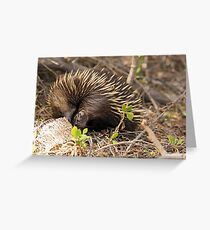 Echidna - 654 Greeting Card