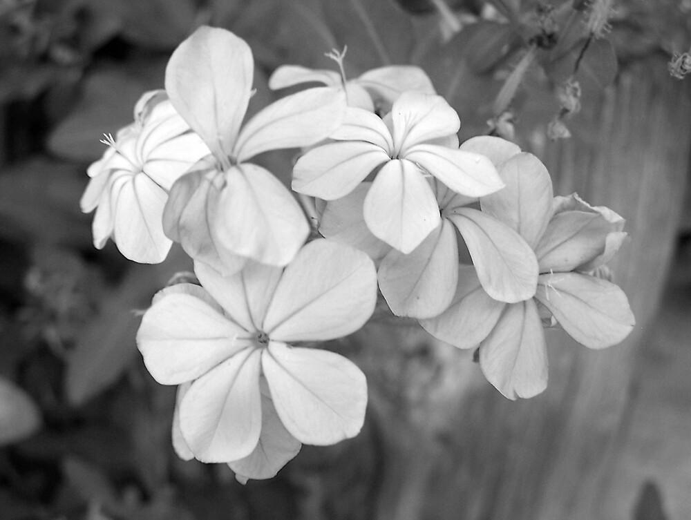 Flowers by AK111