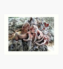 Tree Trimmings Art Print