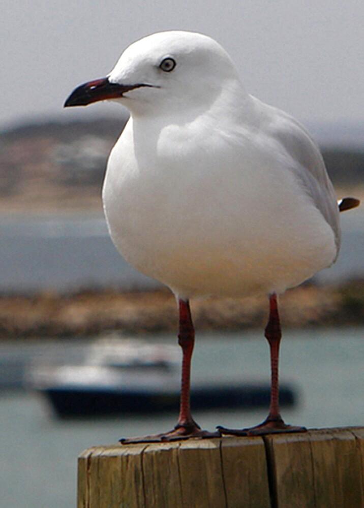 A gull I met on holiday by georgieboy98