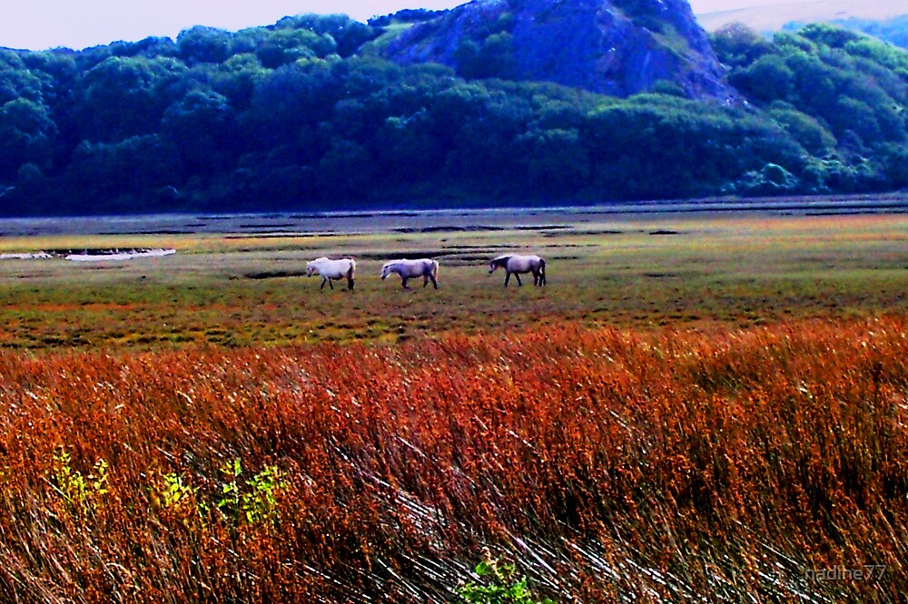 Welsh Mountain Ponies by nadine77
