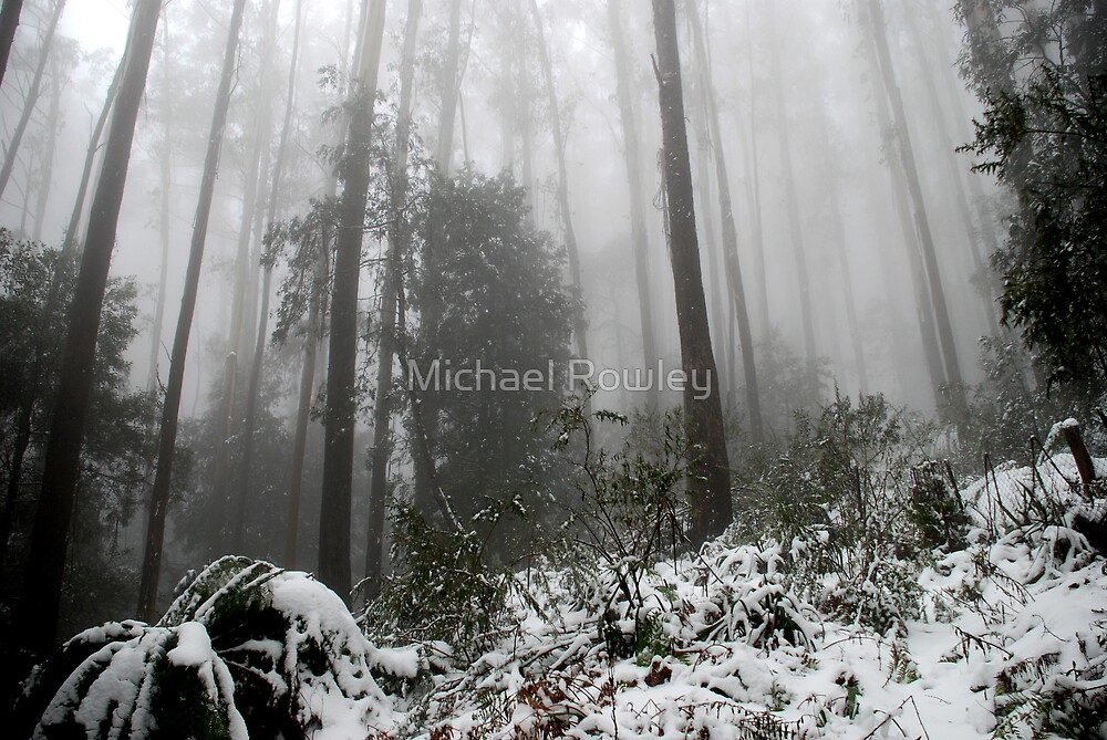 Winter Snow by Michael Rowley