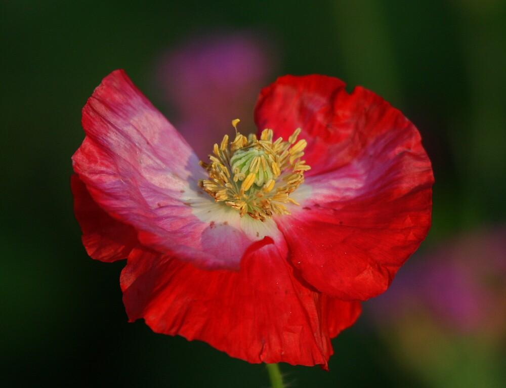 Flower. by zenmatt