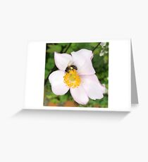 Honey Bee Pink Greeting Card