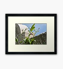 Searching for the Sun Framed Print