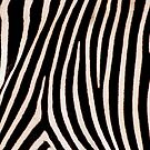 Zebra Pattern by ljm000
