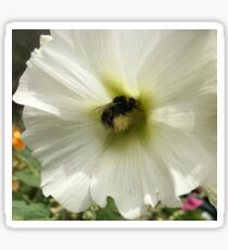 Bumble Bee White Sticker
