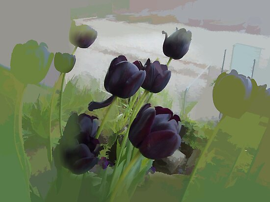abstract of Black Tulips by hilarydougill