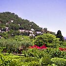 Charming Italian Vineyards In Capri by daphsam