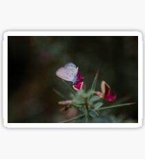 cute butterfly on yellow cosmos flower on nature background, Sticker