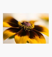 Closeup crop of a vibrant yellow and orange Daisy in full bloom  Photographic Print