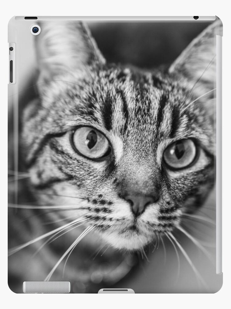 cat - cat by FRANCK TORRALBA