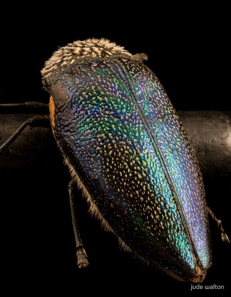 beetleback by jude walton