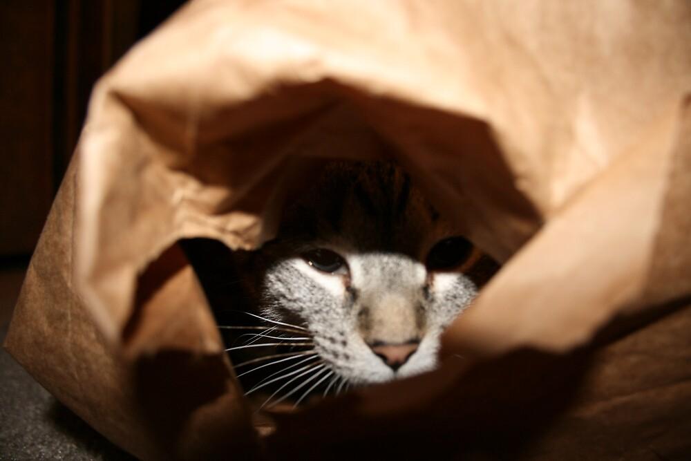 paper bag prey by Brynne Kaufmann