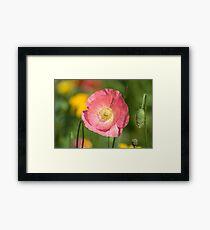 Shirley Poppy 2017-3 Framed Print