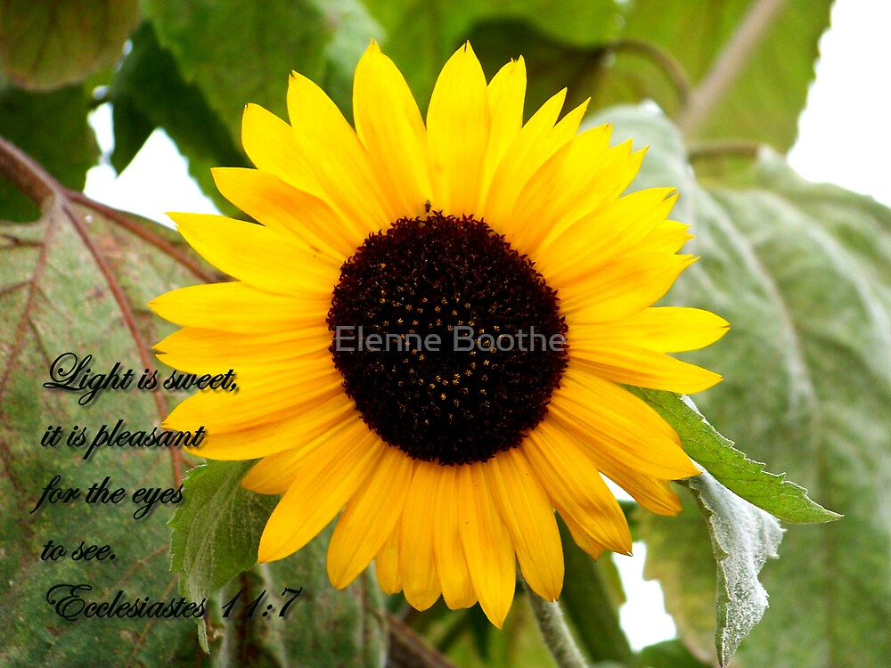 Sunshine by Elenne Boothe