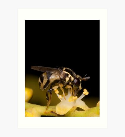 Hoverfly on Palm Flower Art Print