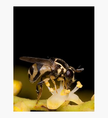Hoverfly on Palm Flower Photographic Print